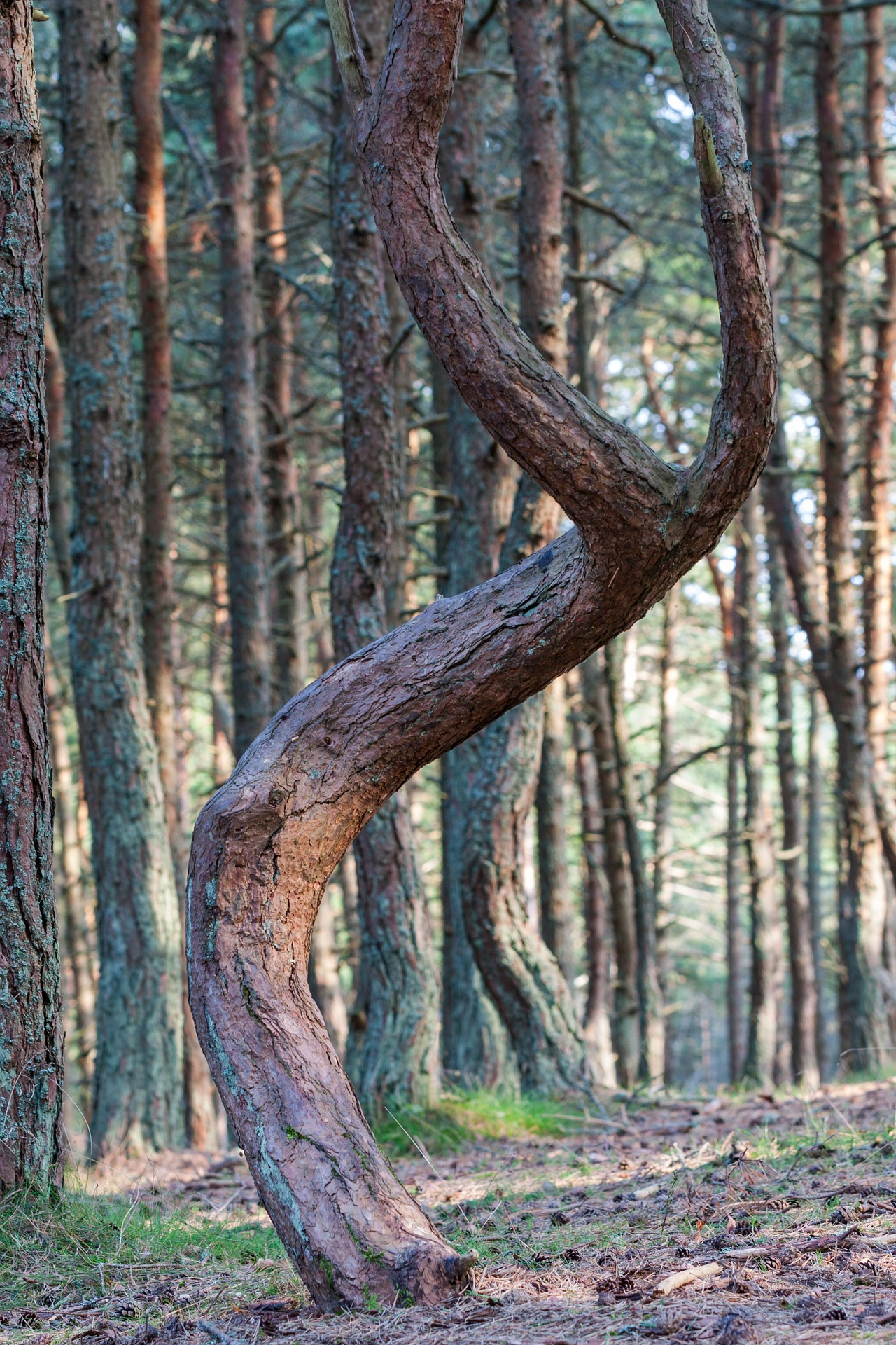 forest-3680358_1920.jpg